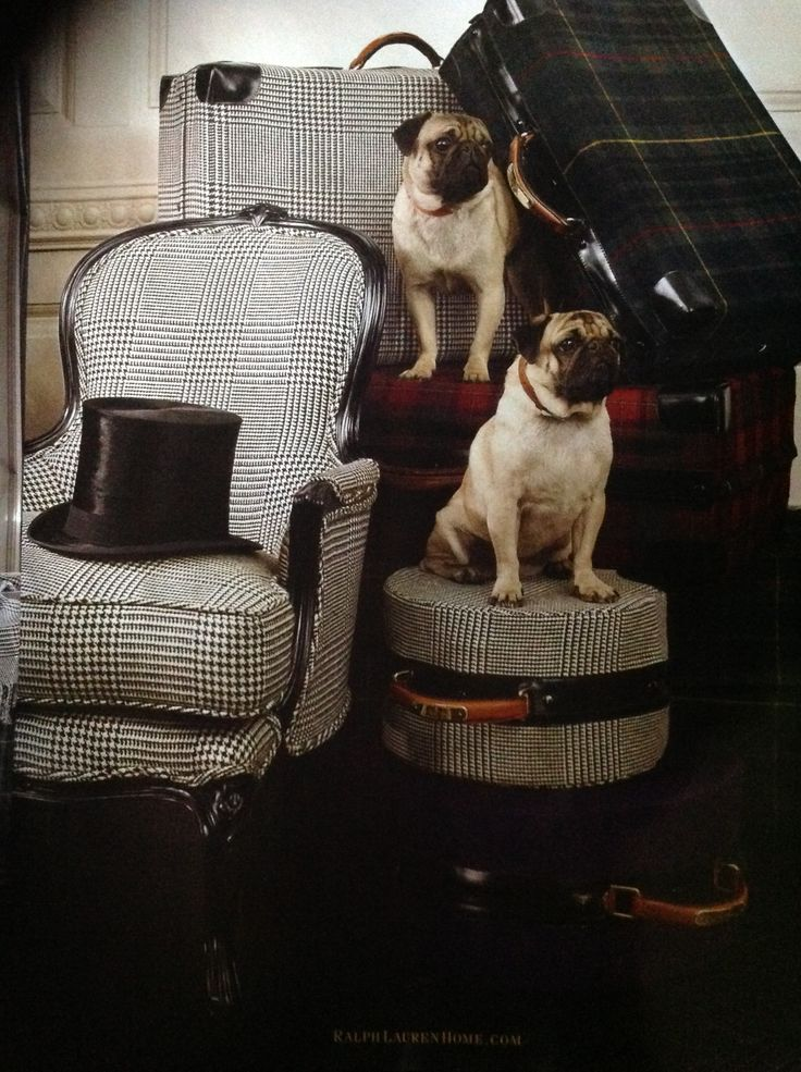 Chair; small pattern; pug | Image source: Ralph Lauren Home